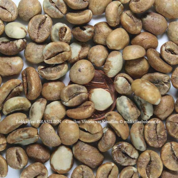 BRASILIEN - Coffea canephora var. Kouillou, pulped washed