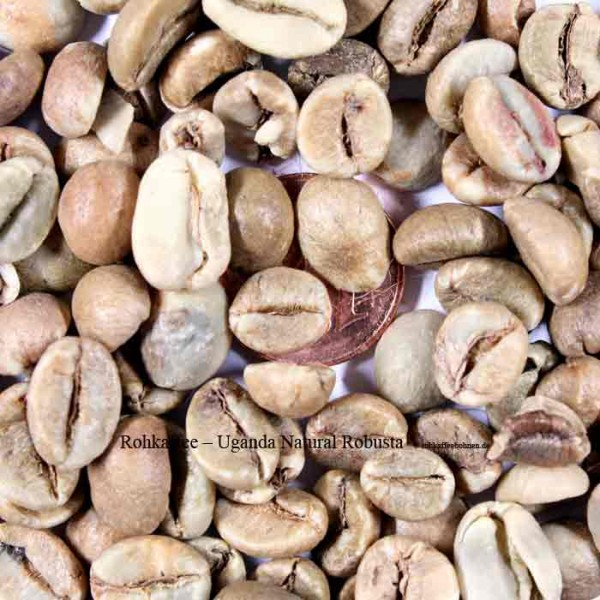 Uganda - Robusta - sun drying Sreen18+ Lot19/7