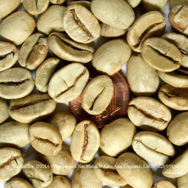 rohkaffee-india-monsooned-nat-malabar-aa-asia-elephant-lot-nr-020-95834-rohkaffeebohnen.de