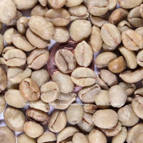 INDIEN - Coffea liberica Varietät Liberica - AA18up, Premium Qualität,